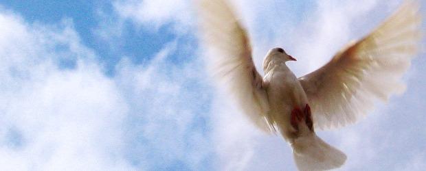 """""""Pois pareceu bem ao Espírito Santo e a nós…"""" (At 15.28). A Igreja Primitiva caminhava em obediência à orientação do Espírito Santo. As decisões eram tomadas em submissão à sua […]"""