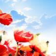 Em nosso calendário denominacional o segundo domingo de fevereiro é reservado para comemorarmos o Dia da Mulher Presbiteriana. Justo seria comemorarmos todos os dias, porém tão merecido reconhecimento público não […]